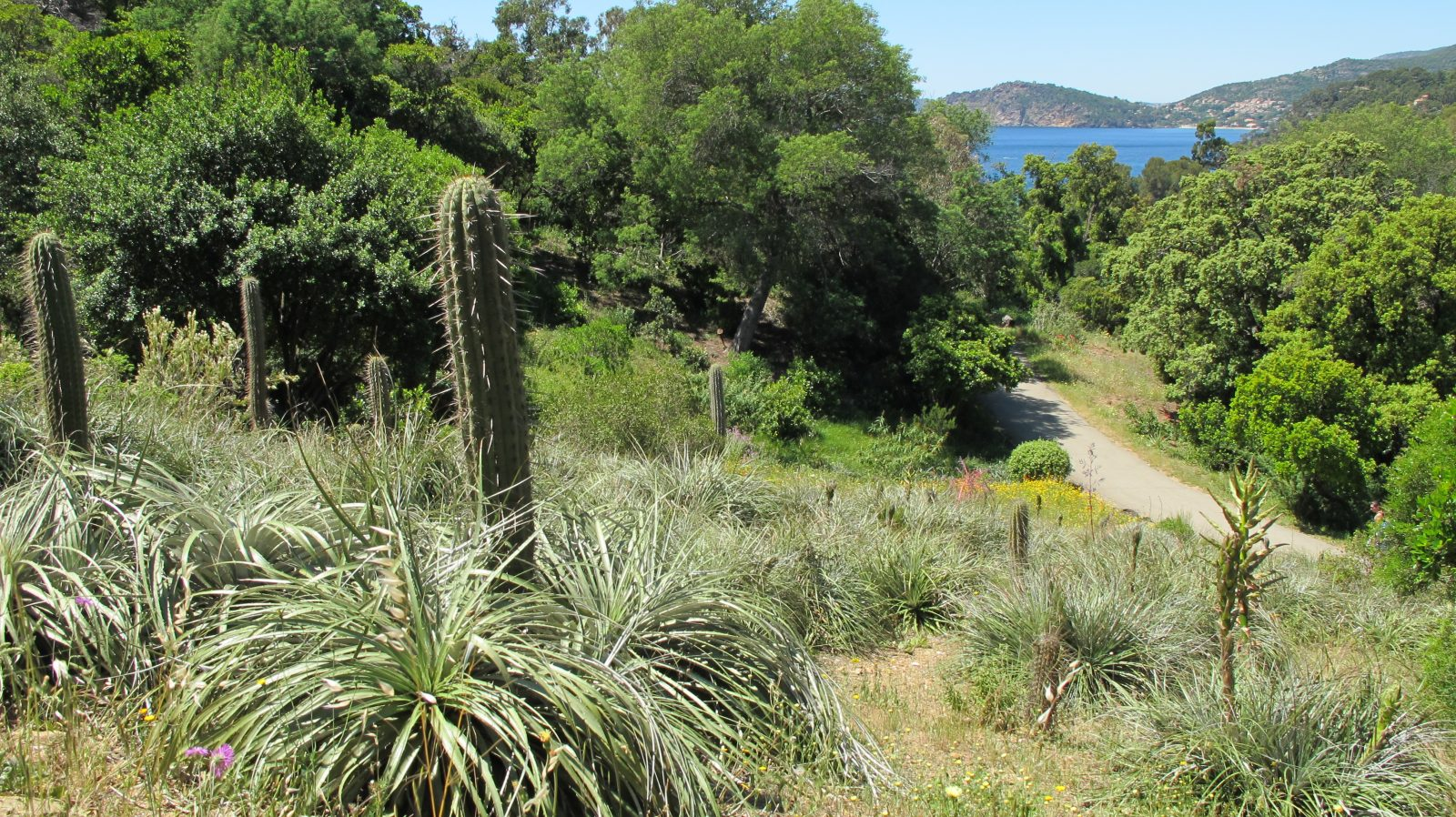 Domaine Du Rayol Le Jardin Des Mediterranees A Rayol Canadel Sur