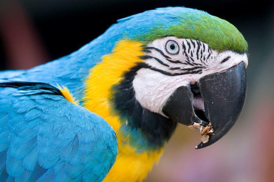 Jardin Zoologique Tropical A La Londe Les Maures Office De