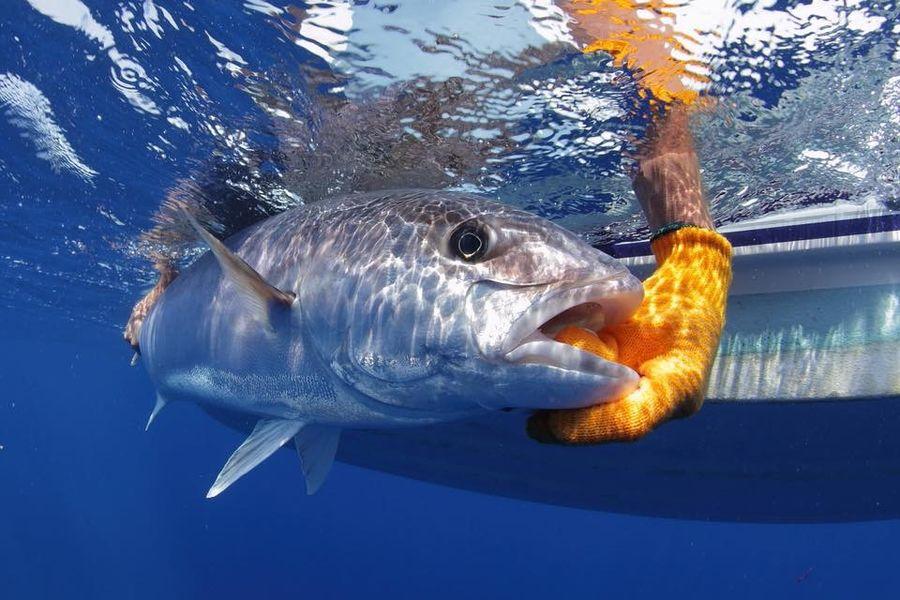 Lavandou Sport Fishing